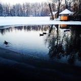 Δασικό νερό πάγου παπιών δέντρων εστιατορίων χιονιού λιμνών ποταμών Vorzel Στοκ Φωτογραφίες