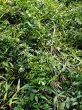 Δασικό νερό φυσικό Κεράλα φύλλων όμορφο στοκ εικόνες