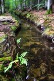 Δασικό νερό Στοκ εικόνα με δικαίωμα ελεύθερης χρήσης