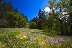 Δασικό ξέφωτο άνοιξη με τα ρόδινα wildflowers και τα δέντρα Στοκ Εικόνες