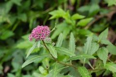 Δασικό λουλούδι φθινοπώρου Στοκ Φωτογραφίες