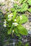 Δασικό λουλούδι Στοκ Φωτογραφία