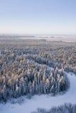 δασικό πάγωμα ημέρας Στοκ εικόνα με δικαίωμα ελεύθερης χρήσης