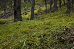 Δασικό πάτωμα Στοκ Εικόνες