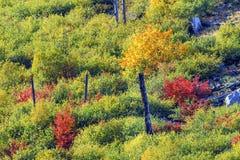Δασικό πέρασμα Ουάσιγκτον Stevens πλευρών βουνών χρωμάτων πτώσης στοκ εικόνες