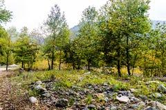 Δασικό περιβάλλον Στοκ εικόνες με δικαίωμα ελεύθερης χρήσης