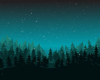 Δασικό περιβάλλον πεύκων με το χιόνι τη νύχτα Στοκ Εικόνα