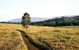 δασικό περπάτημα μονοπατιών Στοκ φωτογραφία με δικαίωμα ελεύθερης χρήσης