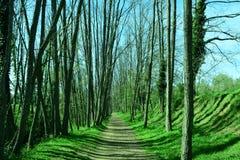 δασικό πράσινο μονοπάτι Στοκ Εικόνες