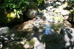 Δασικό ρεύμα με τις φτέρες & τους βράχους υψηλούς - ποιότητα στοκ εικόνες με δικαίωμα ελεύθερης χρήσης
