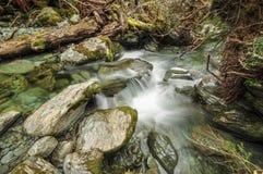 Δασικό ρεύμα στη διαδρομή Routeburn, Νέα Ζηλανδία Στοκ φωτογραφίες με δικαίωμα ελεύθερης χρήσης