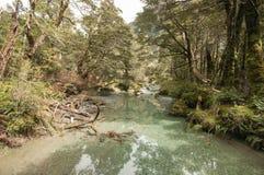 Δασικό ρεύμα στη διαδρομή Routeburn, Νέα Ζηλανδία Στοκ εικόνες με δικαίωμα ελεύθερης χρήσης