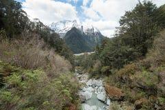 Δασικό ρεύμα στη διαδρομή Routeburn, Νέα Ζηλανδία Στοκ Φωτογραφίες