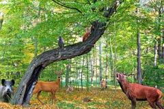 Δασικό σύνολο των ζώων Στοκ εικόνα με δικαίωμα ελεύθερης χρήσης