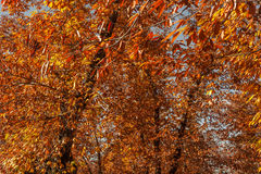 Δασικό σύνολο των πορτοκαλιών φύλλων φθινοπωρινό τοπίο Στοκ φωτογραφίες με δικαίωμα ελεύθερης χρήσης