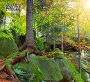 δασικό τεράστιο θερινό δέντρο Στοκ φωτογραφίες με δικαίωμα ελεύθερης χρήσης