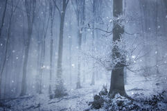 δασικό τεράστιο μαγικό πα&l Στοκ φωτογραφία με δικαίωμα ελεύθερης χρήσης