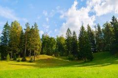 Δασικό τοπίο άνοιξη - πυκνά δασικά δέντρα στην κοιλάδα Στοκ εικόνες με δικαίωμα ελεύθερης χρήσης