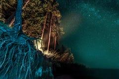 Δασικό τοπίο νύχτας με τα αστέρια στοκ φωτογραφίες