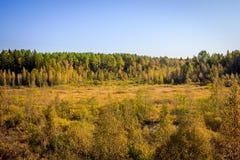 Δασικό τοπίο Σεπτεμβρίου στη Ρωσία το απόγευμα Στοκ Εικόνες