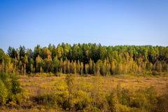 Δασικό τοπίο Σεπτεμβρίου στη Ρωσία το απόγευμα Στοκ Φωτογραφία