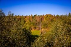 Δασικό τοπίο Σεπτεμβρίου στη Ρωσία το απόγευμα Στοκ εικόνες με δικαίωμα ελεύθερης χρήσης