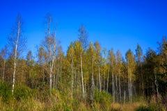 Δασικό τοπίο Σεπτεμβρίου στη Ρωσία το απόγευμα Στοκ φωτογραφίες με δικαίωμα ελεύθερης χρήσης
