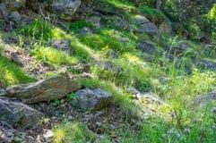 Δασικό τοπίο το πρωί Στοκ εικόνες με δικαίωμα ελεύθερης χρήσης
