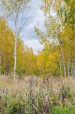 Δασικό τοπίο φθινοπώρου με τα χρυσά φύλλα και την όμορφη φύση Στοκ εικόνα με δικαίωμα ελεύθερης χρήσης