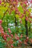 Δασικό τοπίο φθινοπώρου με τα χρυσά φύλλα και την όμορφη φύση Στοκ Φωτογραφίες