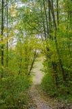 Δασικό τοπίο φθινοπώρου με τα χρυσά φύλλα και την όμορφη φύση Στοκ εικόνες με δικαίωμα ελεύθερης χρήσης