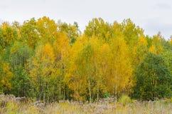 Δασικό τοπίο φθινοπώρου με τα χρυσά φύλλα και την όμορφη φύση Στοκ φωτογραφίες με δικαίωμα ελεύθερης χρήσης