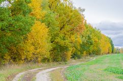 Δασικό τοπίο φθινοπώρου με τα χρυσά φύλλα και την όμορφη φύση Στοκ φωτογραφία με δικαίωμα ελεύθερης χρήσης