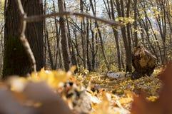 Δασικό τοπίο φθινοπώρου με το βαθιές bokeh και την αντανάκλαση στοκ εικόνες