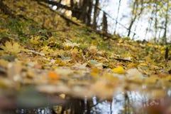 Δασικό τοπίο φθινοπώρου με το βαθιές bokeh και την αντανάκλαση στοκ φωτογραφία με δικαίωμα ελεύθερης χρήσης