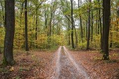 Δασικό τοπίο φθινοπώρου με το δρόμο των φύλλων πτώσης Μονοπάτι στη δασική φύση φθινοπώρου σκηνής στοκ φωτογραφίες με δικαίωμα ελεύθερης χρήσης