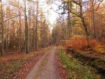 Δασικό τοπίο φθινοπώρου, Πολωνία στοκ εικόνα