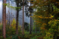 Δασικό τοπίο φθινοπώρου της Misty Στοκ εικόνα με δικαίωμα ελεύθερης χρήσης