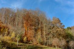 Δασικό τοπίο φθινοπώρου φθινοπώρου συλλογής Στοκ φωτογραφία με δικαίωμα ελεύθερης χρήσης