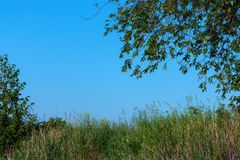 Δασικό τοπίο χωρίς καλοκαίρι ανθρώπων Στοκ εικόνα με δικαίωμα ελεύθερης χρήσης