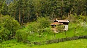 δασικό τοπίο Στοκ φωτογραφίες με δικαίωμα ελεύθερης χρήσης