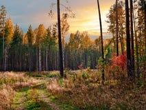 δασικό τοπίο Στοκ Εικόνες