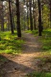 δασικό τρέξιμο παρόδων Στοκ φωτογραφίες με δικαίωμα ελεύθερης χρήσης