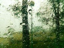 Δασικό υγρό παράθυρο γουρνών άποψης Στοκ Φωτογραφίες
