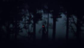 Δασικό υπόβαθρο αποκριών νύχτας στοκ εικόνες