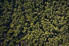 Δασικό υπόβαθρο Δέντρα πεύκων κατά την πράσινη δασική άποψη άνωθεν Θερινή δασική κεραία στοκ εικόνες