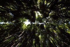 Δασικό υπόβαθρο μπαμπού Arashiyama, Κιότο, Ιαπωνία Στοκ Φωτογραφίες