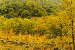 Δασικό υπόβαθρο τοπίων φθινοπώρου Στοκ εικόνα με δικαίωμα ελεύθερης χρήσης