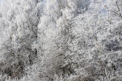 Δασικό υπόβαθρο χιονιού Στοκ Φωτογραφίες