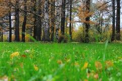δασικό φυτό Στοκ εικόνα με δικαίωμα ελεύθερης χρήσης
